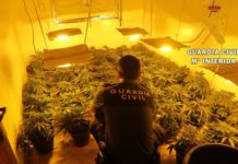 La Guardia Civil aprehende 900 plantas de Marihuana (cannabis Sativa